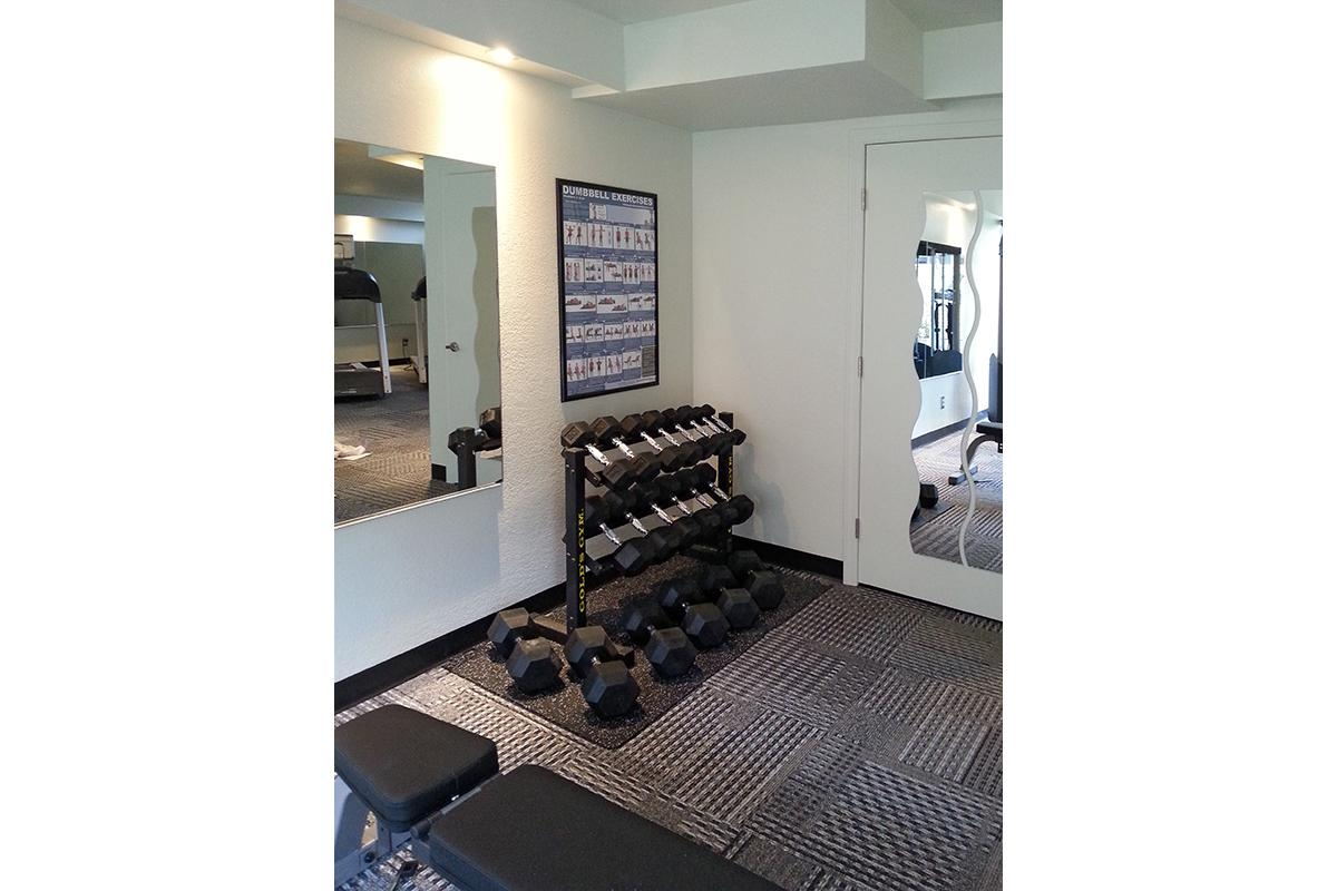 The Weights In The Fitness Center