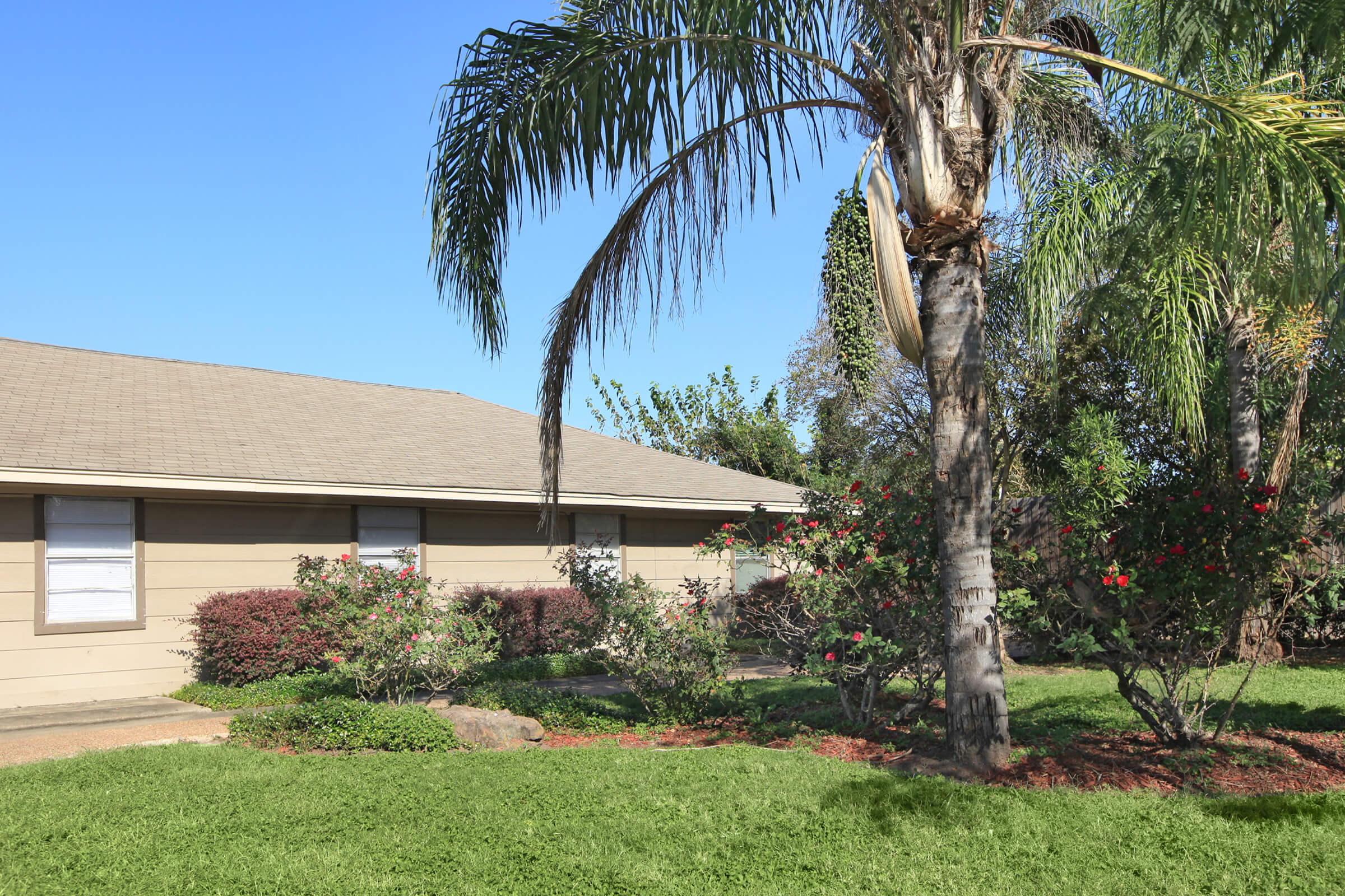 Picture of Southlawn Palms