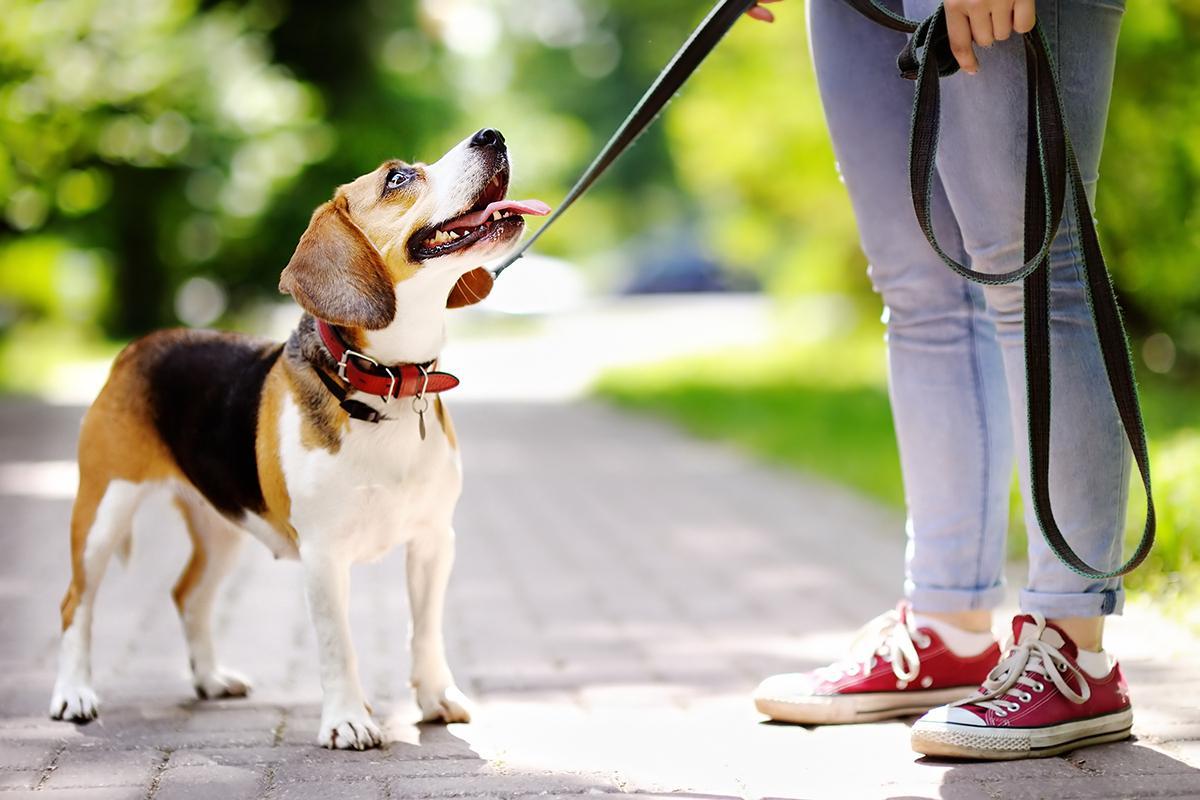 a dog on a leash