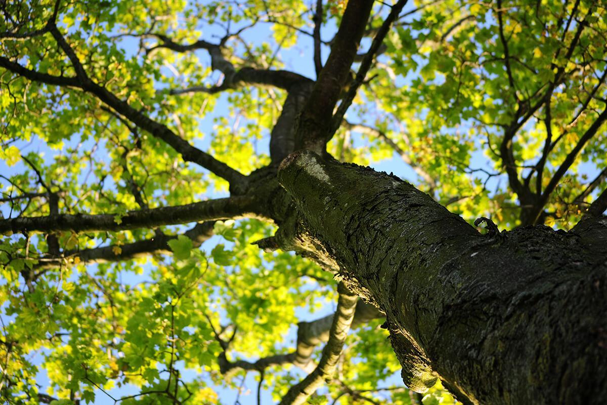 exterior-tree2.jpg