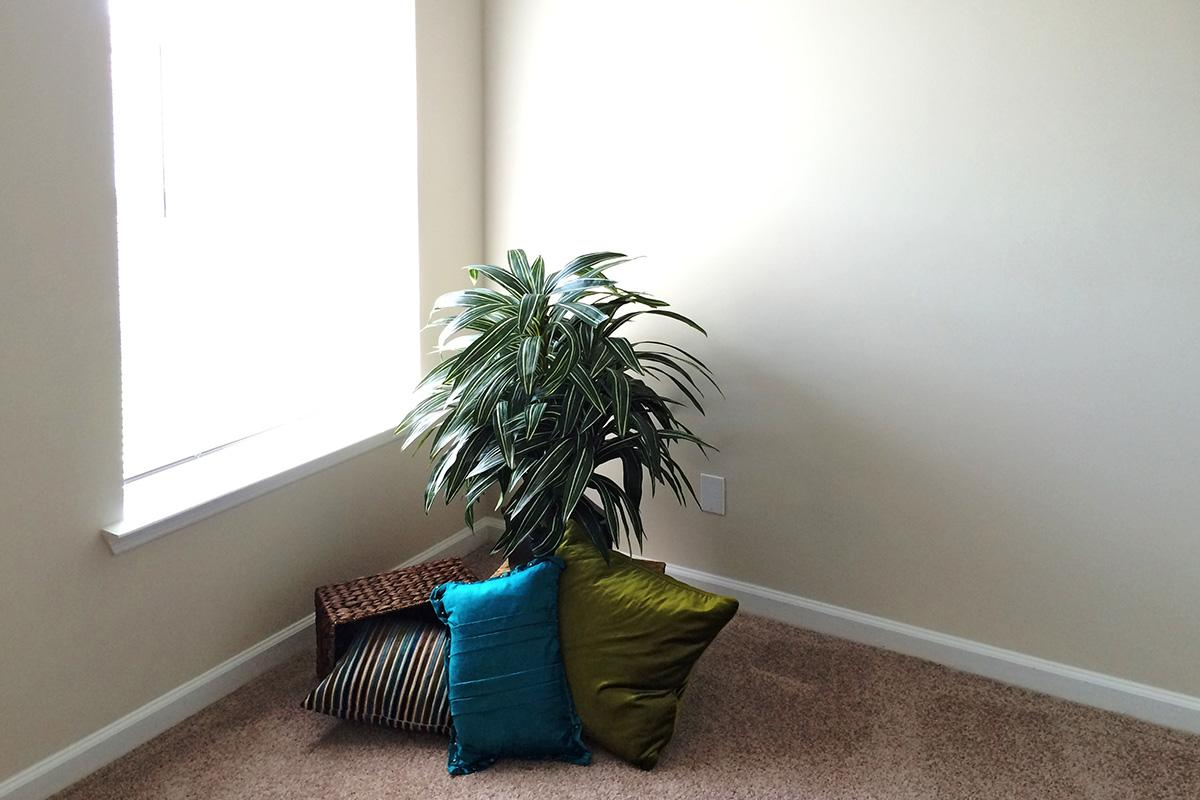 a living area with palm trees on a sunny window