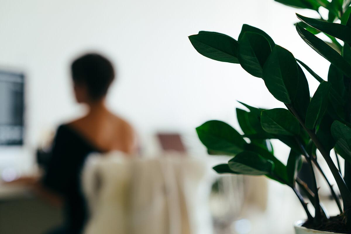 interior-desk-plant.jpg