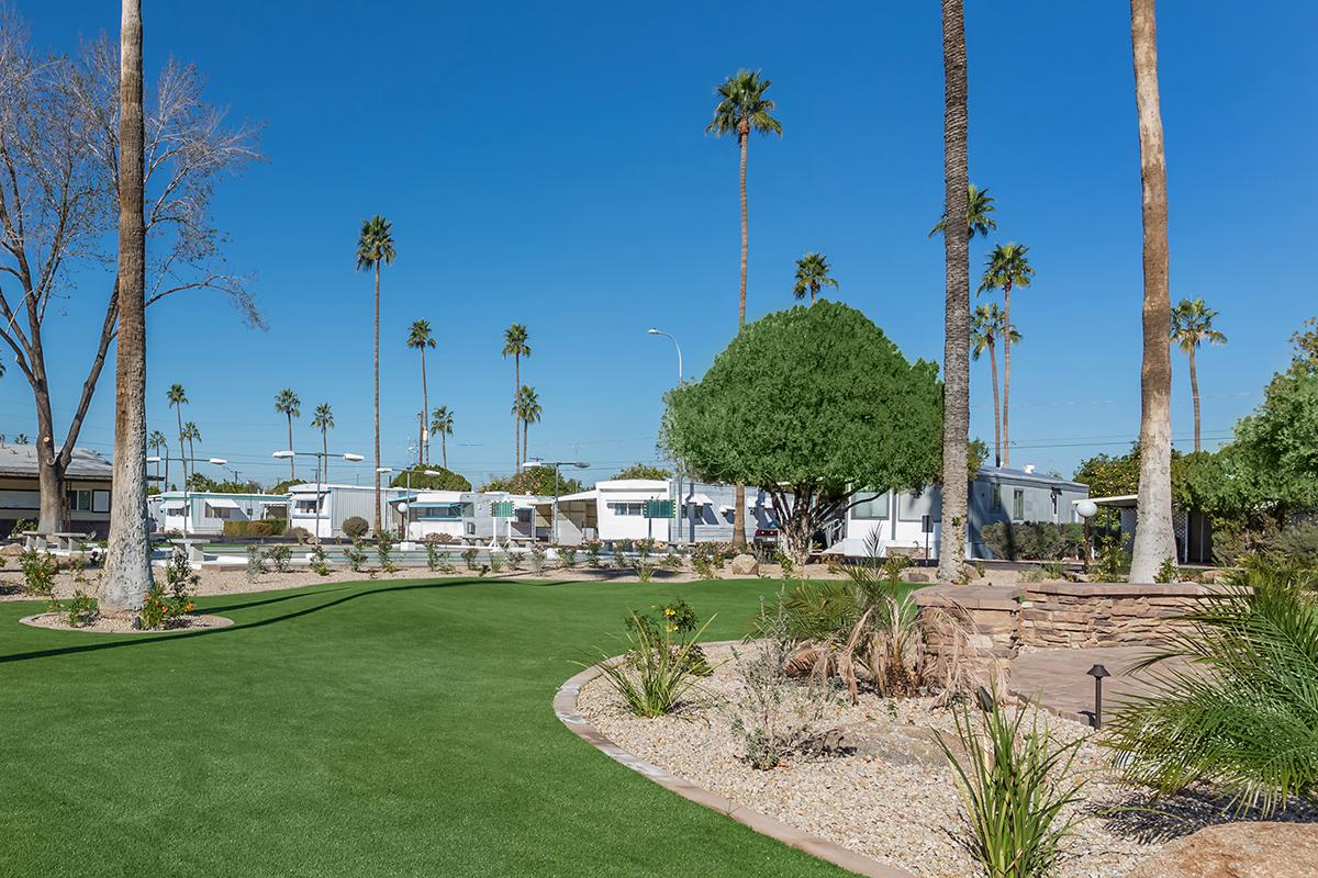 a large lawn in front of a palm tree