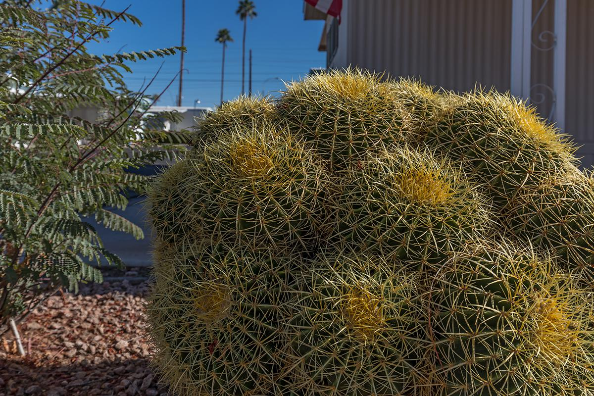a cactus in front of a pile of hay