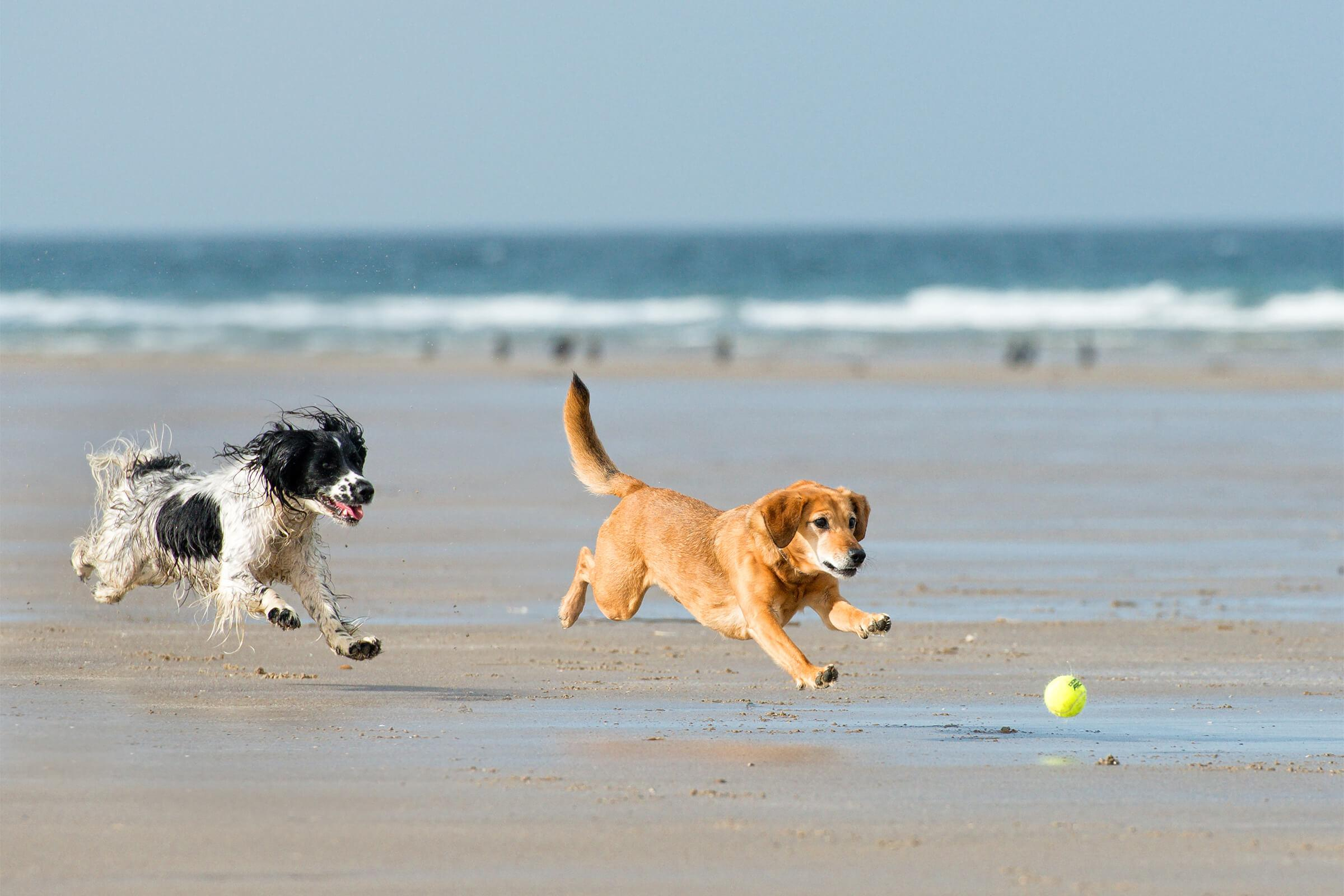 a dog walking on a sandy beach next to the ocean