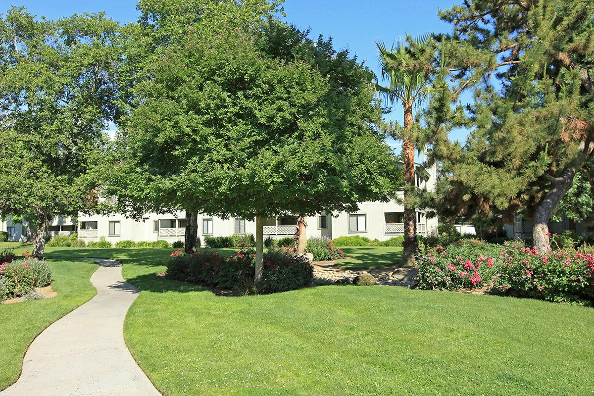a large lawn in front of a tree