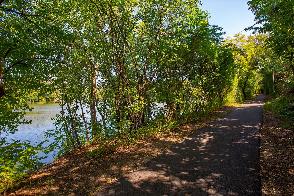 a path with trees on the side of a river