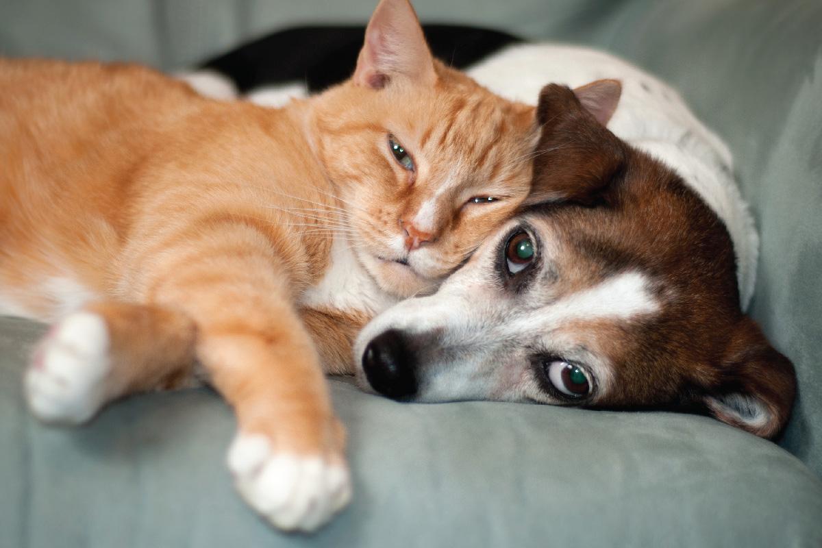 Pet Information
