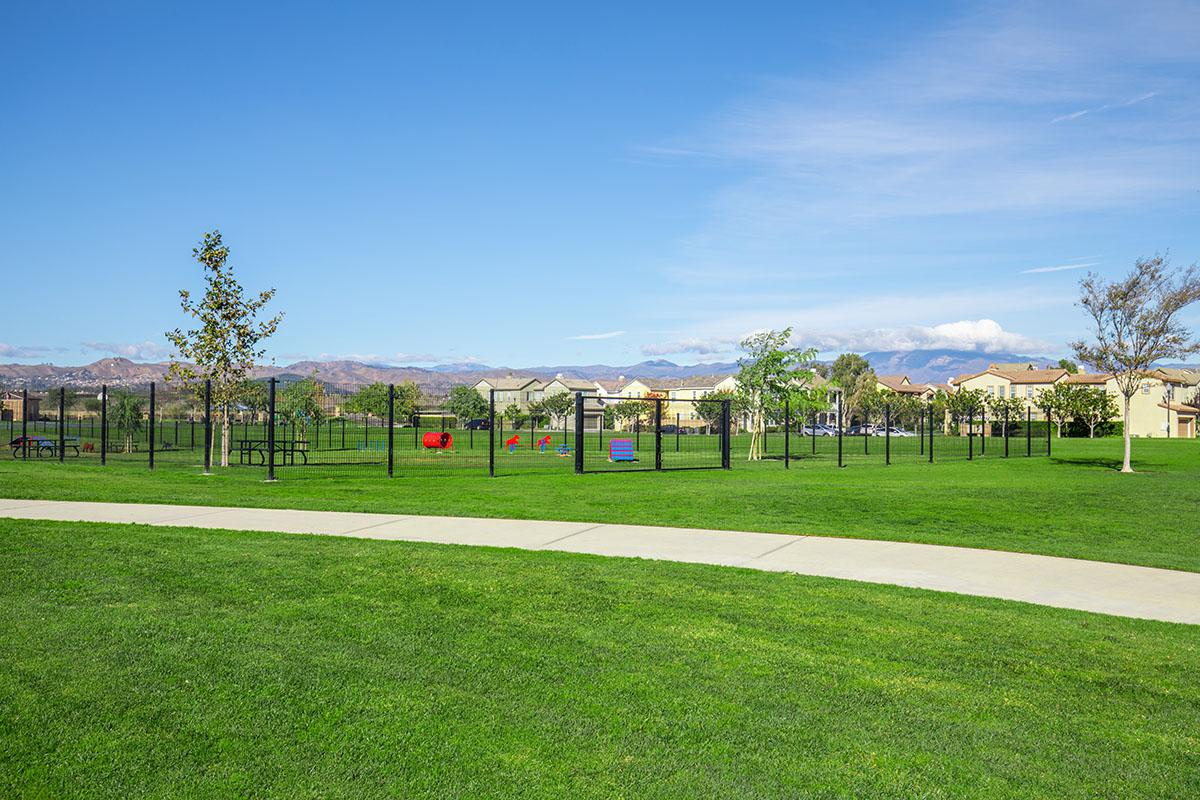 Enclosed dog park with agility course