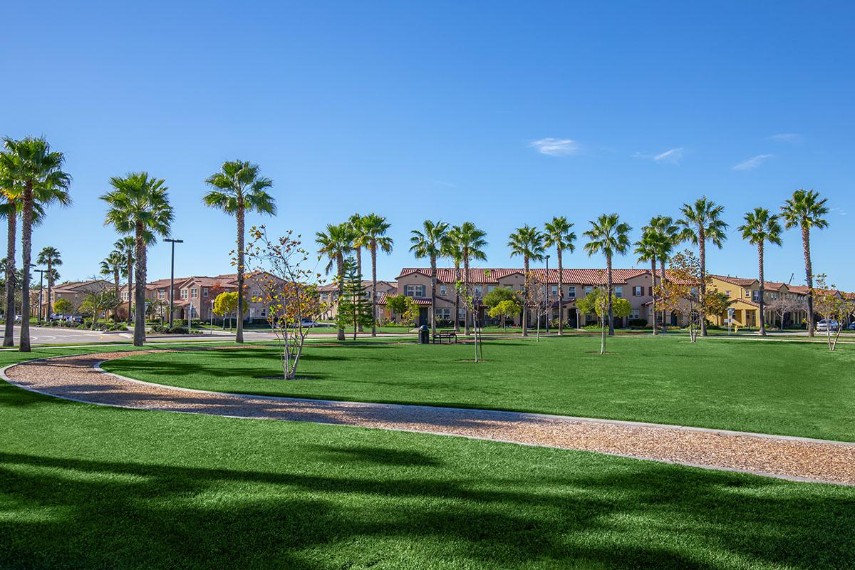 Outdoor space filled with palm trees and walking trail