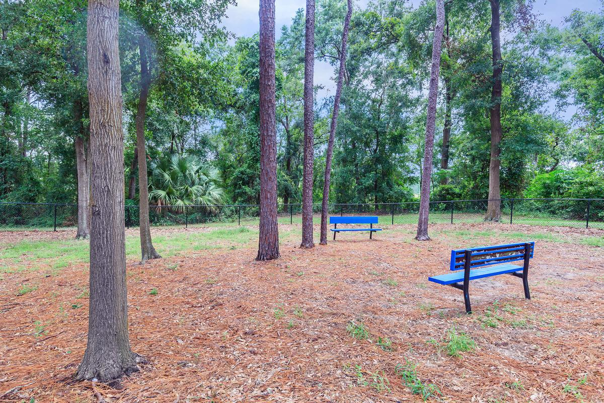 an empty park bench next to a forest