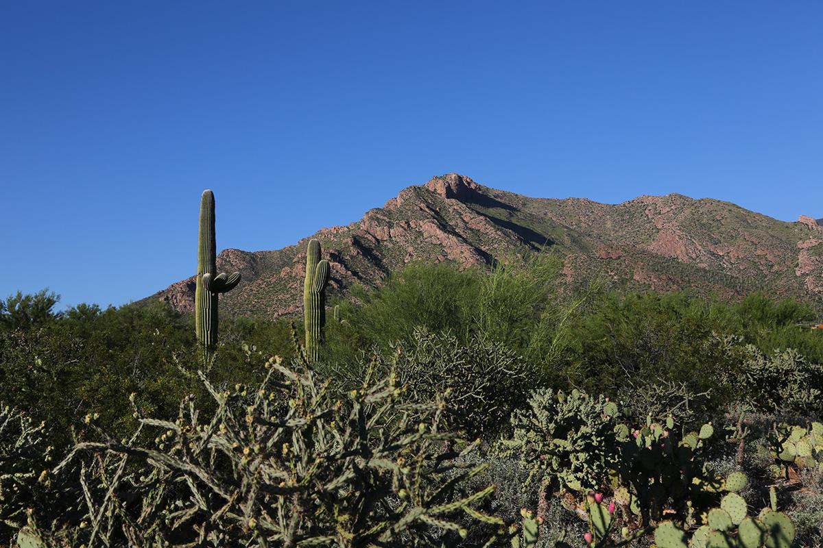 Tucson Mountain 2.jpg