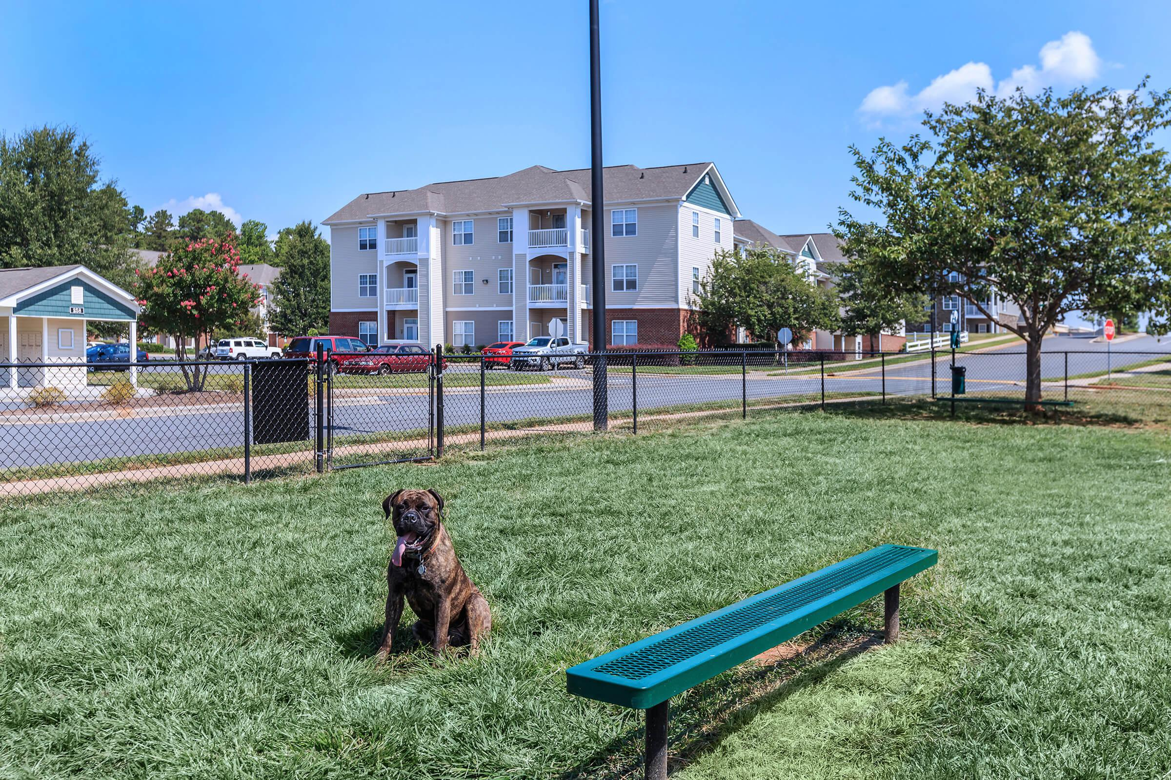 a dog sitting on a bench in front of a building