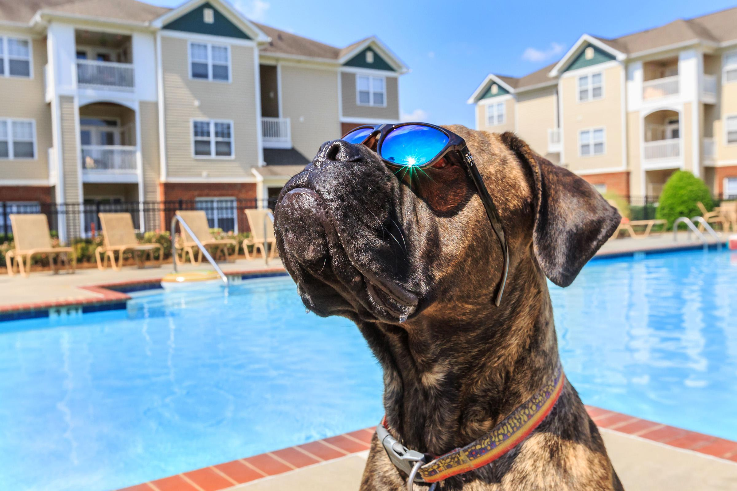 We welcome your furry friends at Bradford Park in Rock Hill, South Carolina