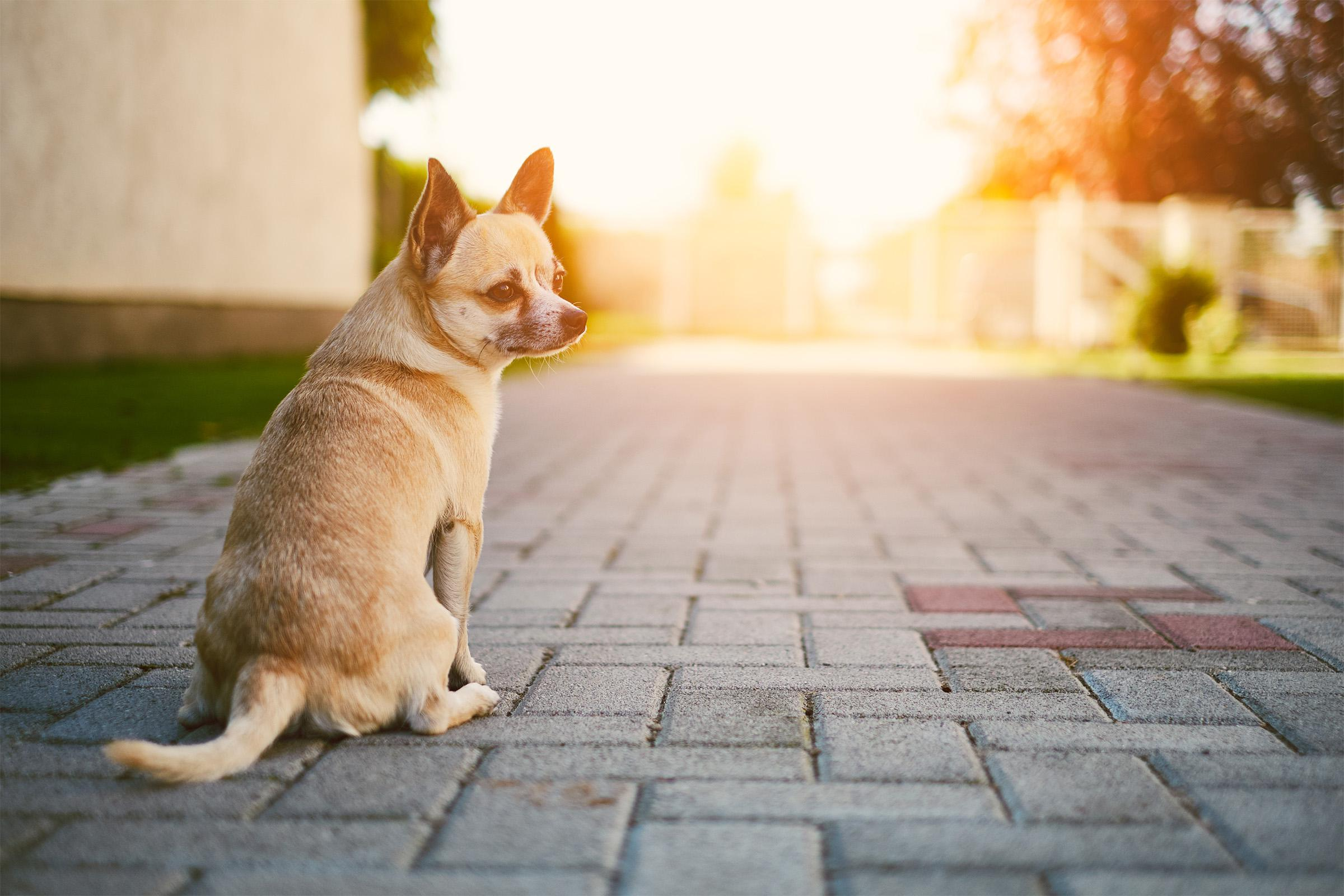 a dog sitting on the ground