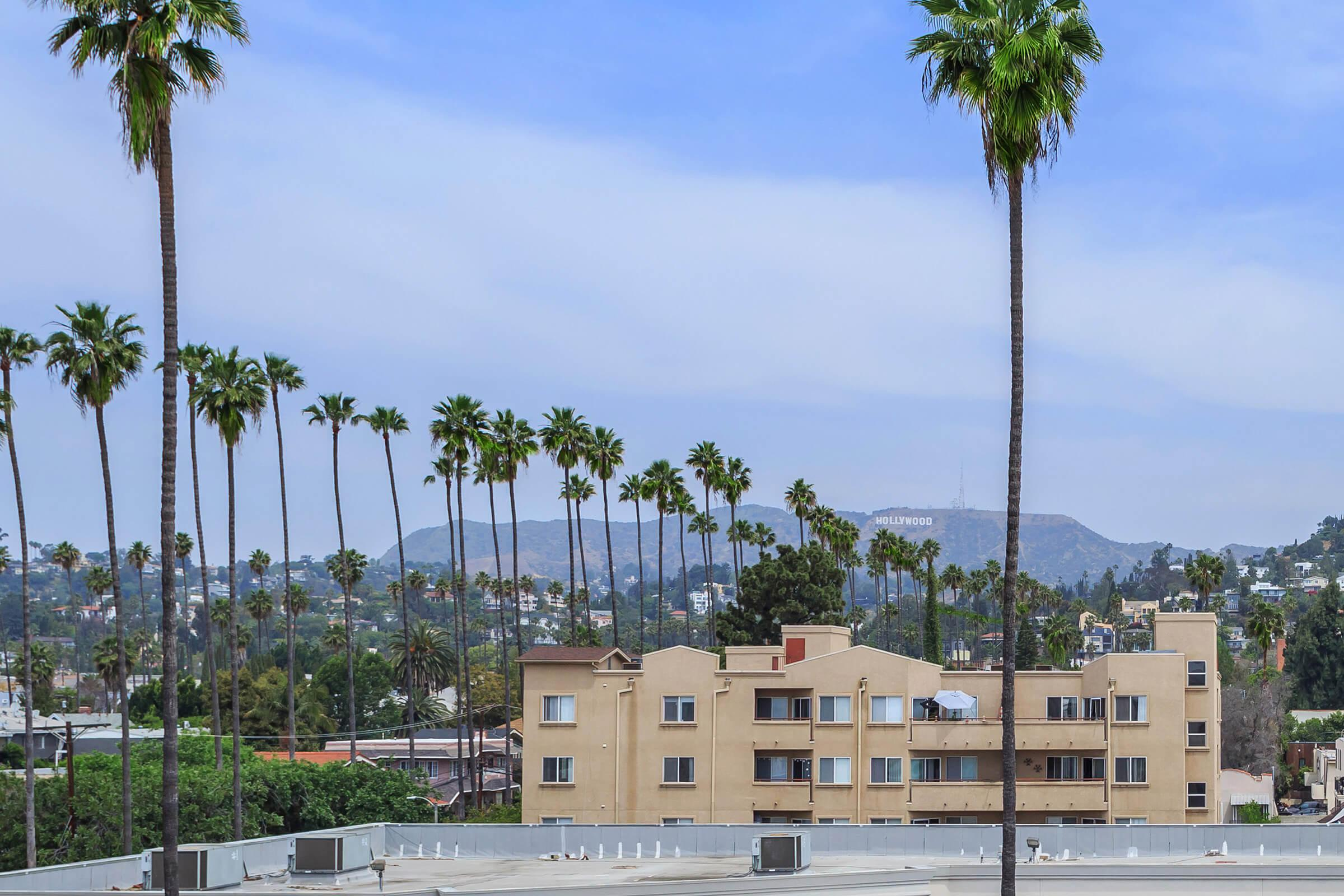 a group of palm trees and buildings in the background