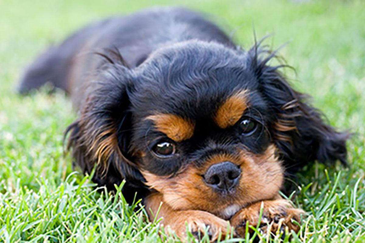a black and brown dog sitting in the grass