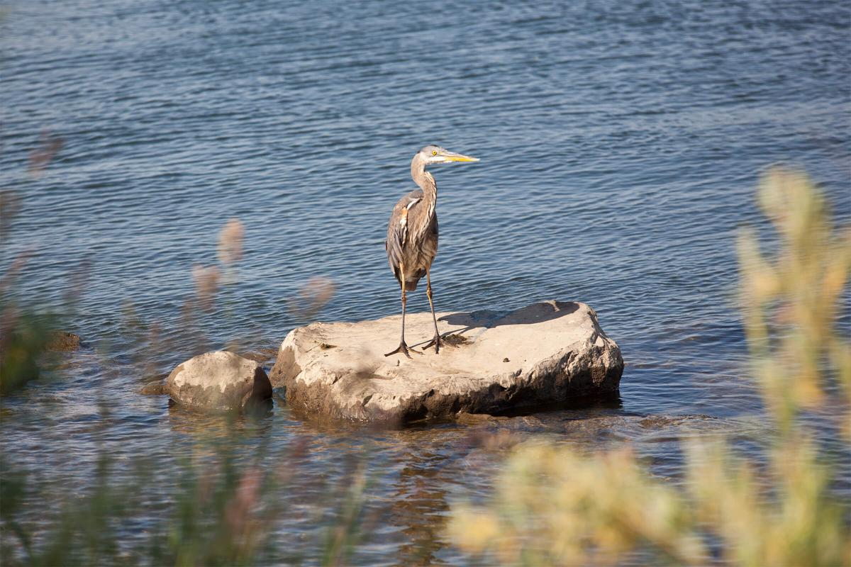 a bird standing on a rock next to a body of water