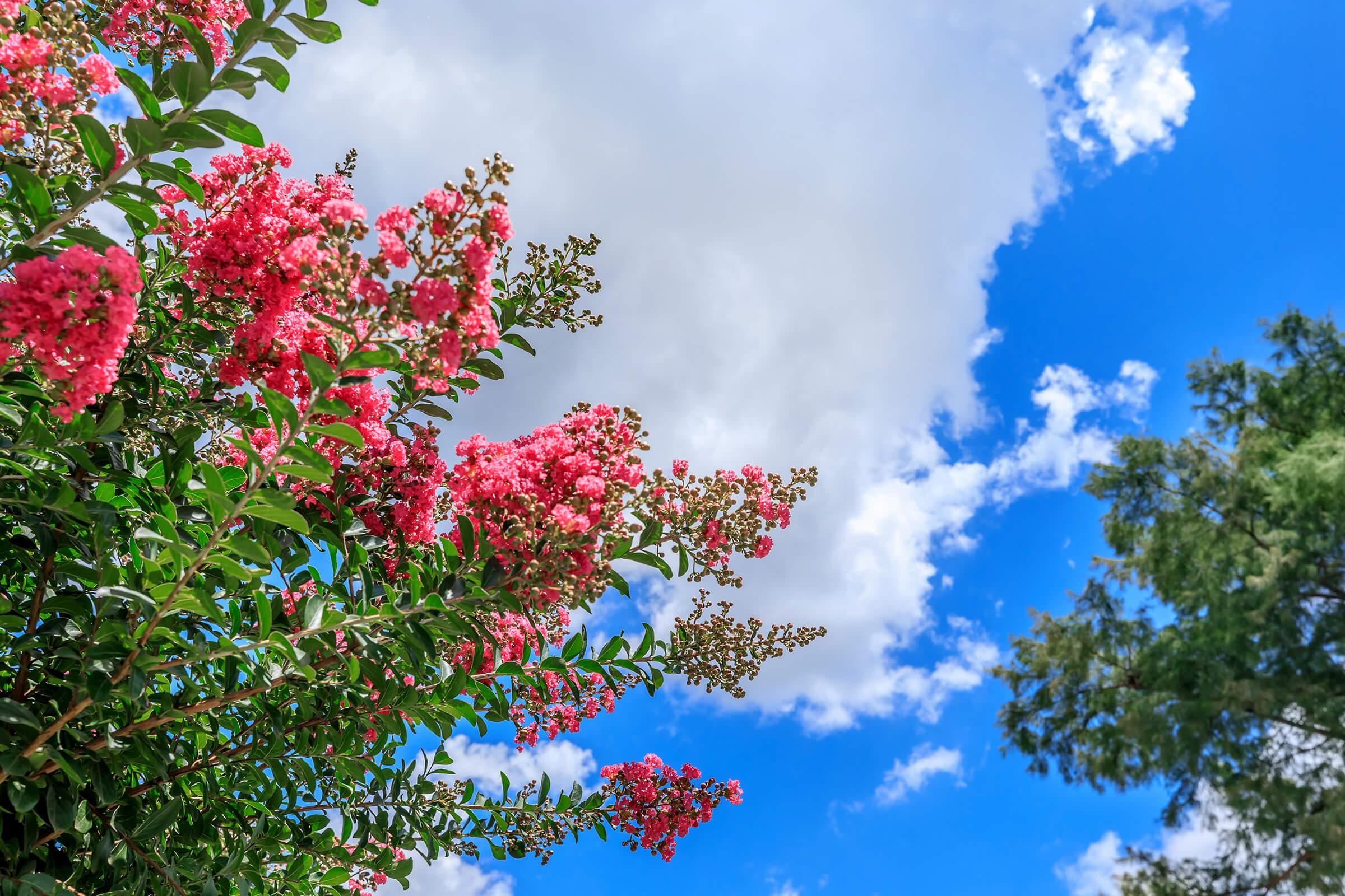 a tree with pink flowers