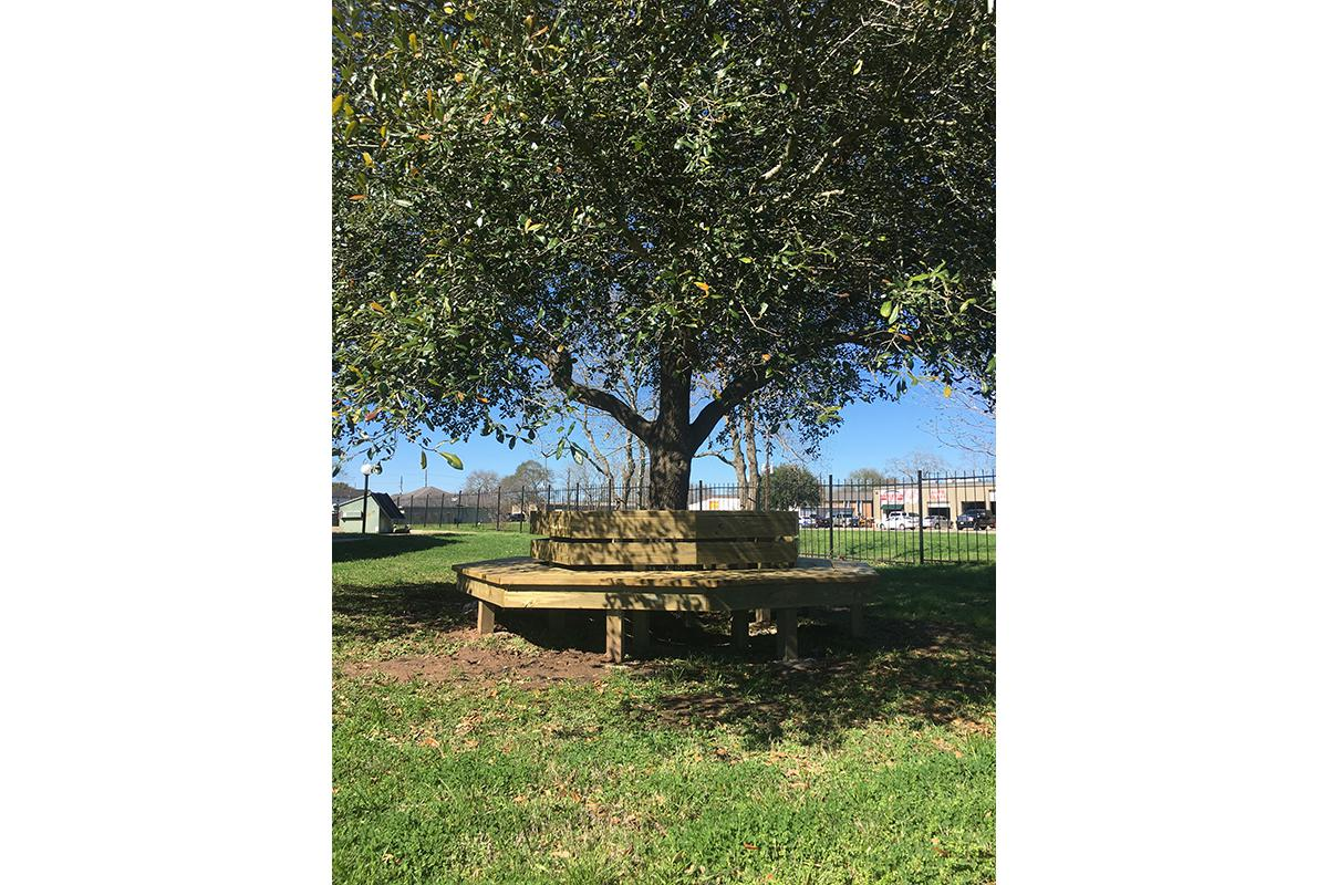 a bench in front of a tree