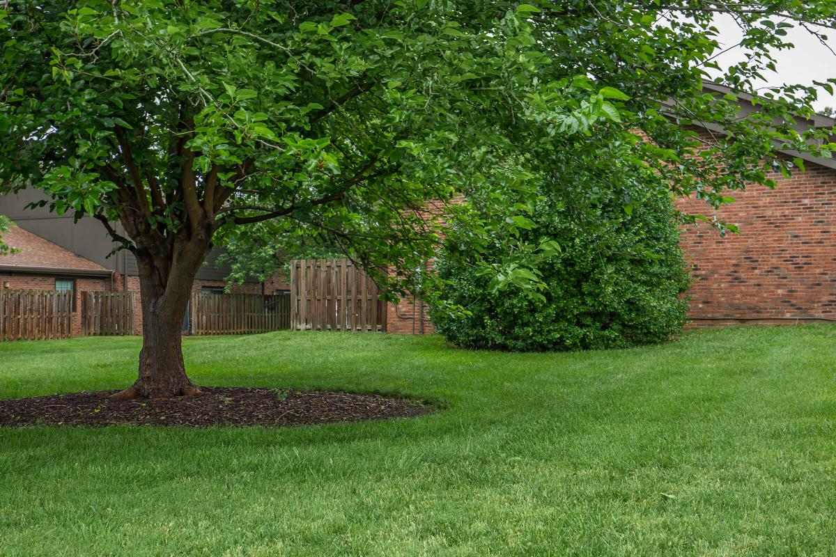 Mature Shade Trees Here at Colony House Apartments For Rent In Murfreesboro, Tennessee