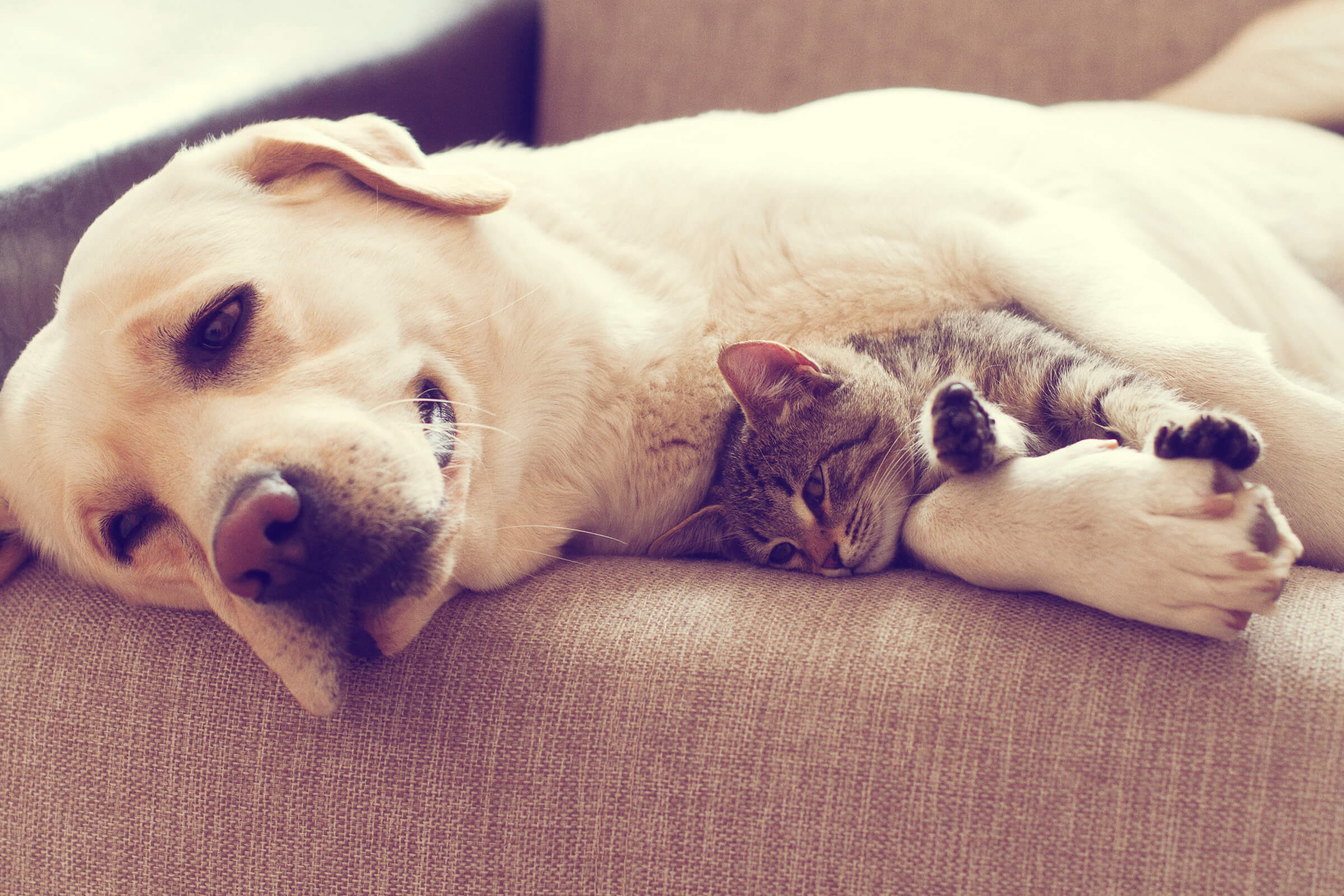 We are a Pet-Friendly Community Here at the Colony House in Murfreesboro, Tennessee