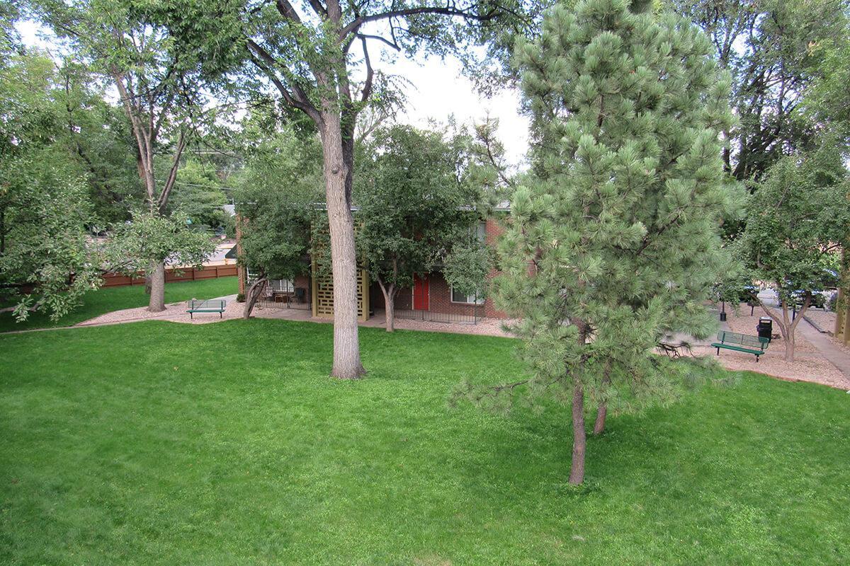 a tree in a grassy yard