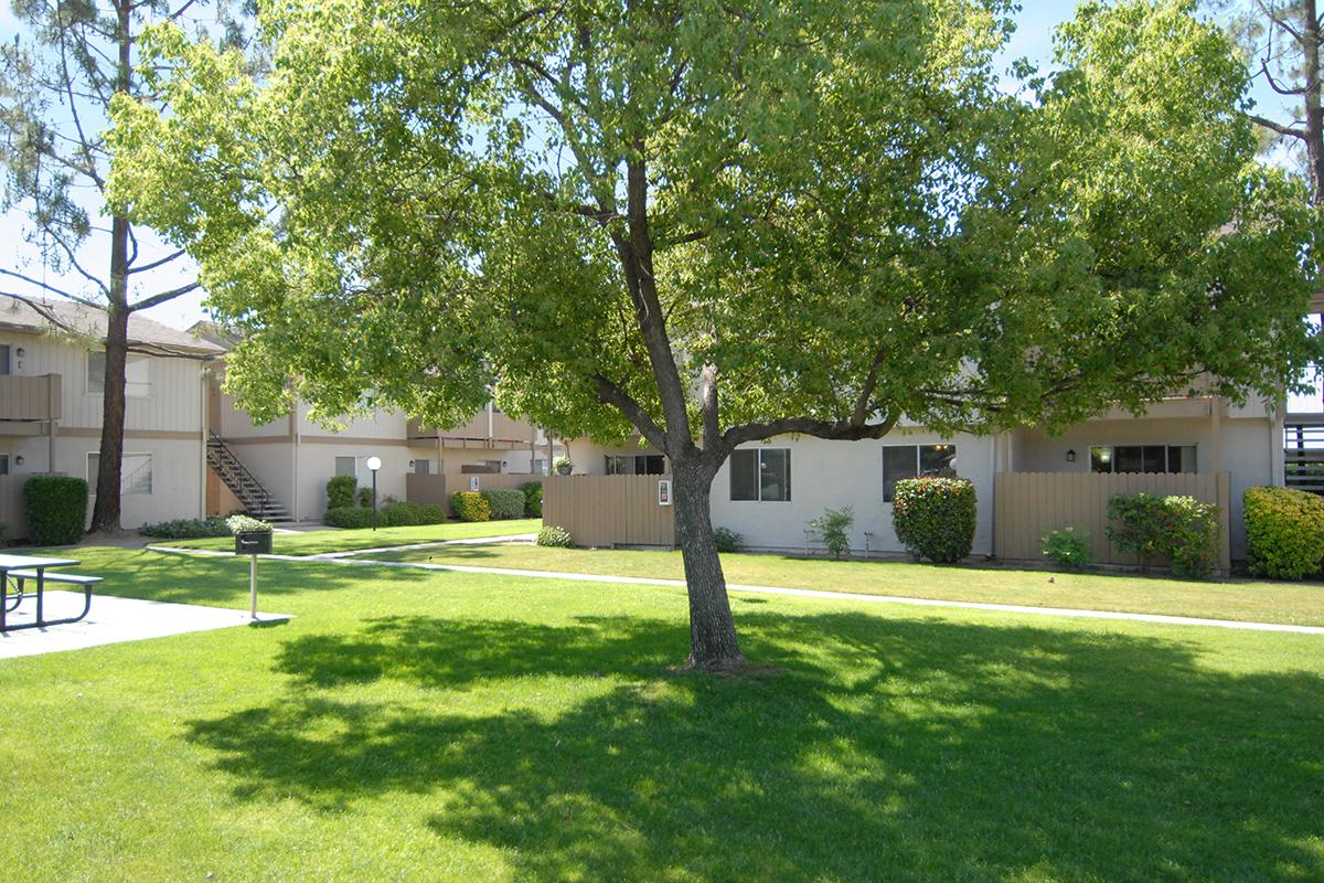 Valley View Apartment Homes has shade trees