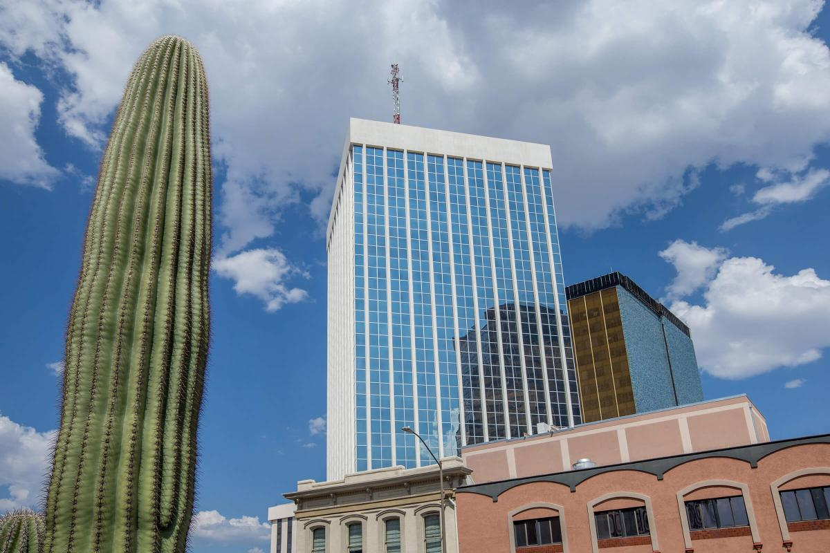 a cactus in front of a building