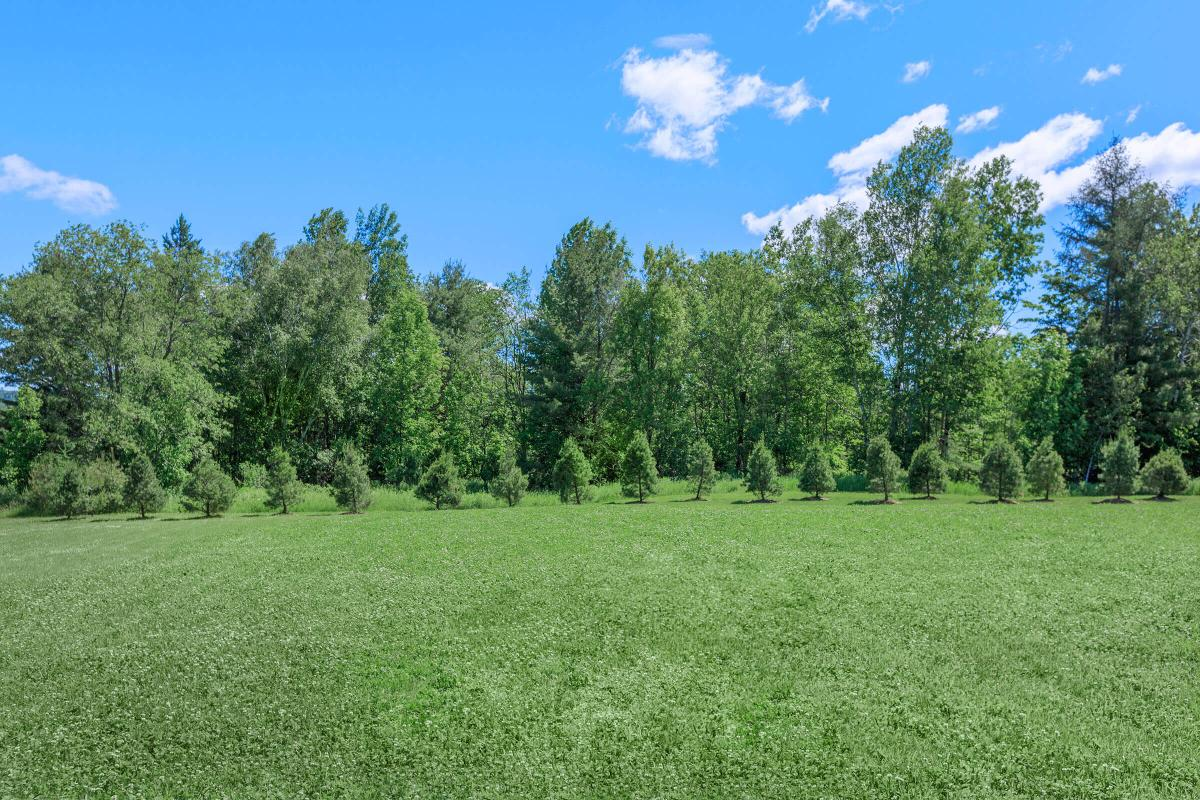 a large green field with trees in the background