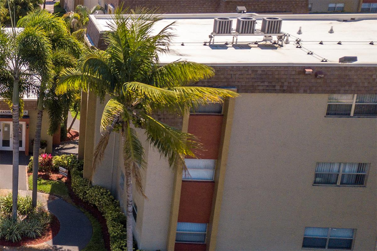 a couple of palm trees on the side of a building