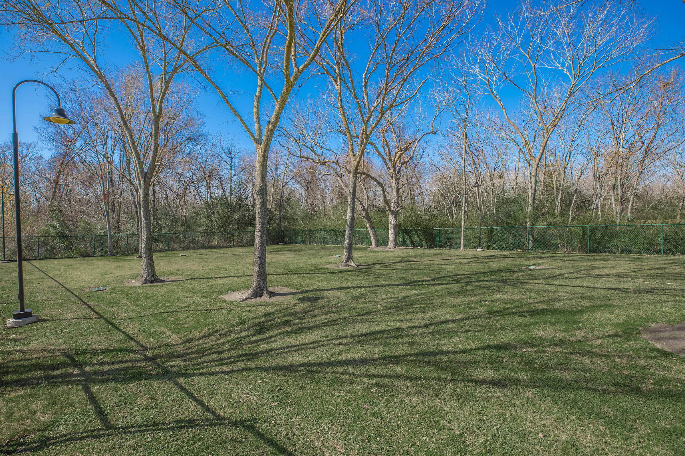 a tree in a grassy field