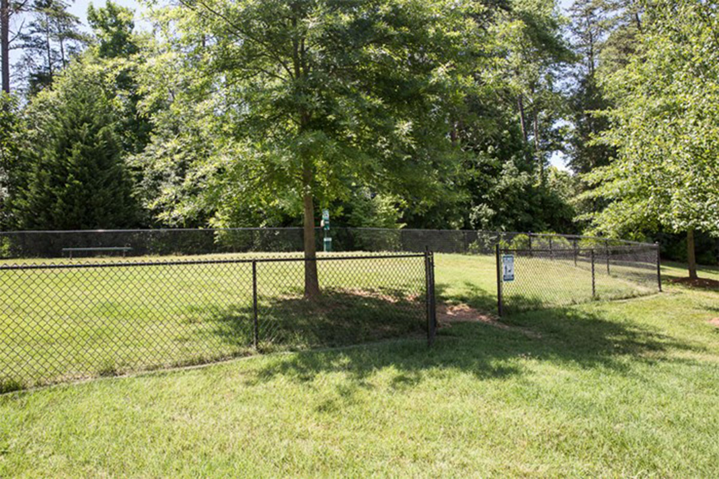 a tree in a fenced in area