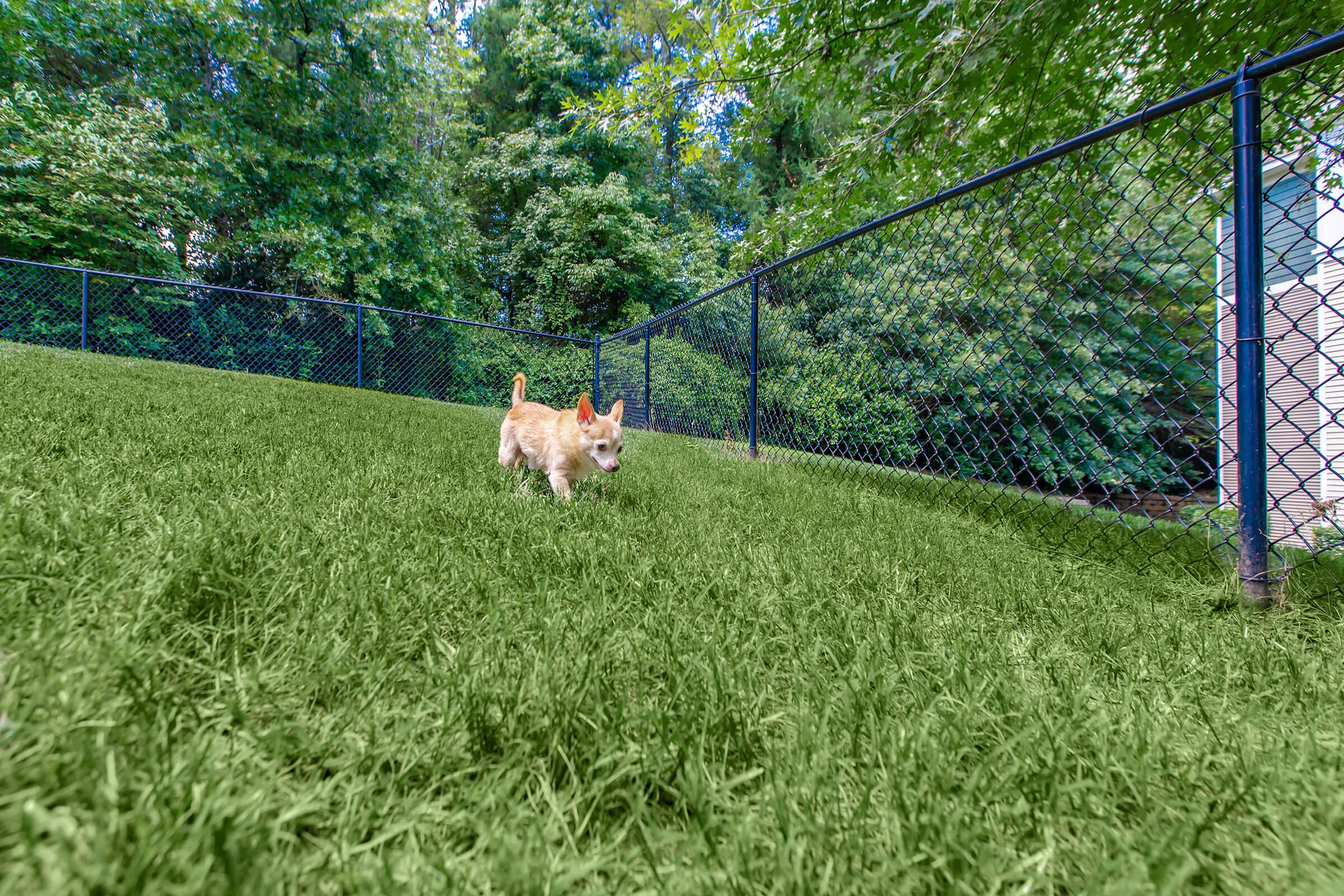 a dog in a fenced in field
