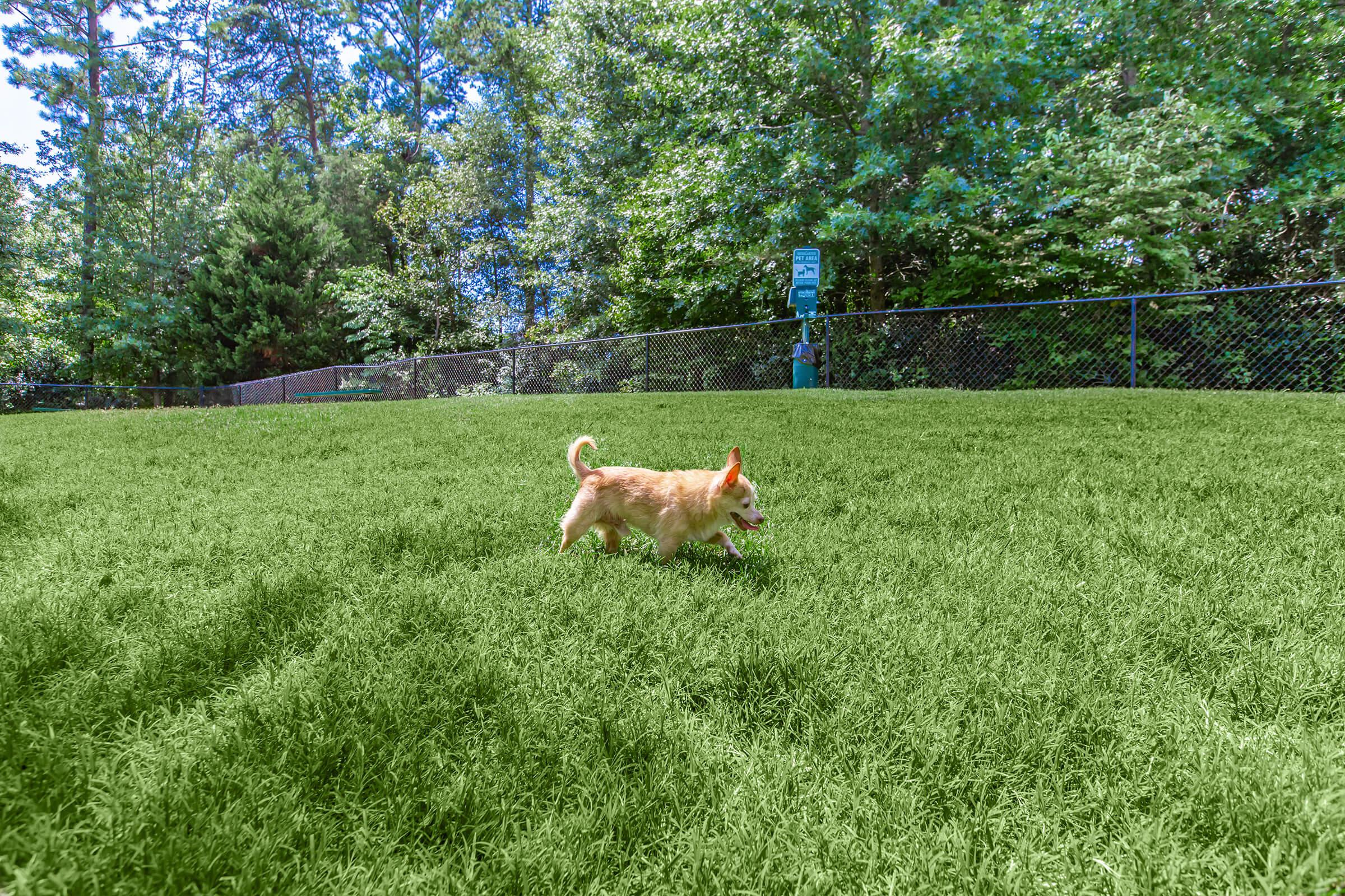 a dog standing on a lush green field