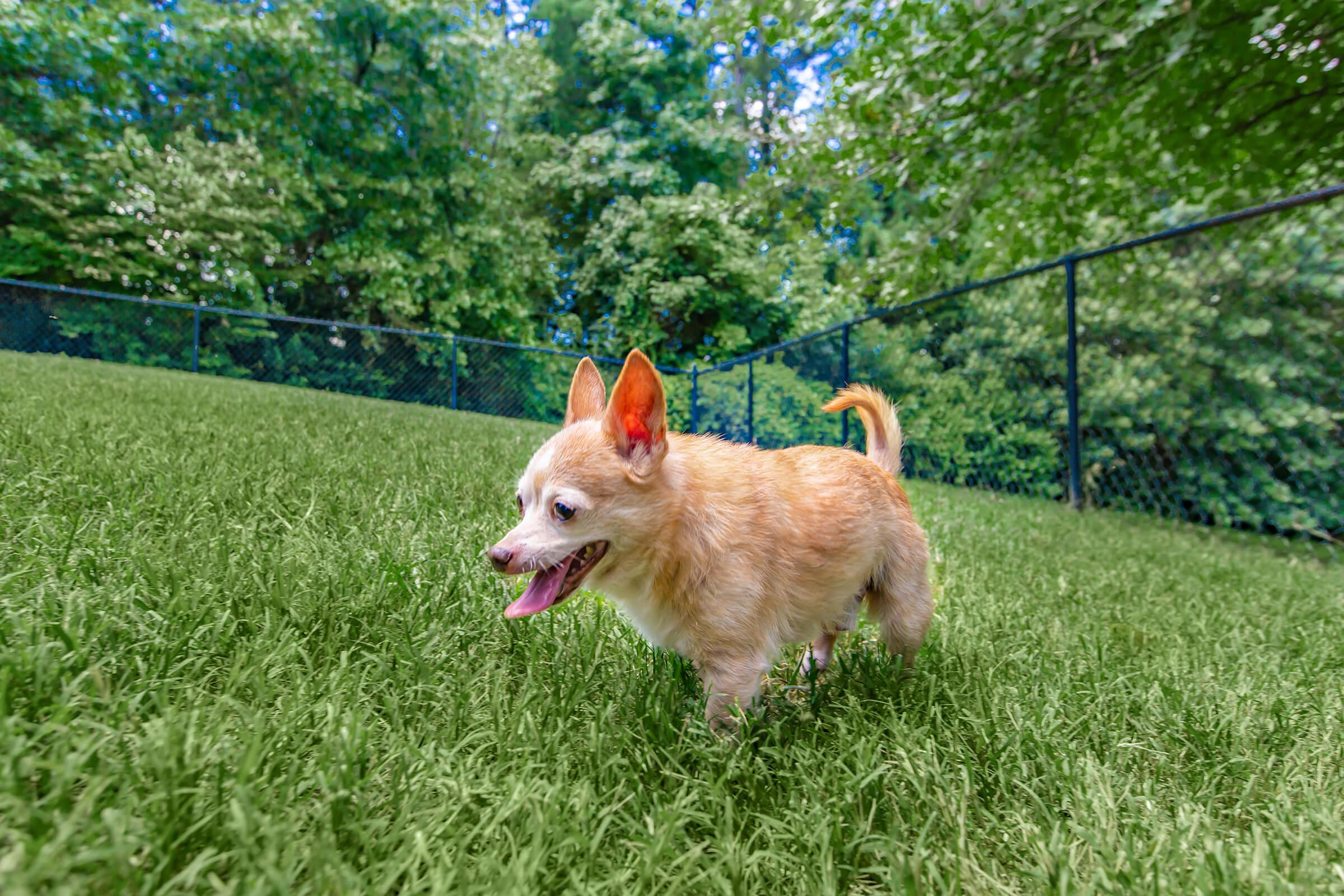 a dog standing on top of a grass covered field