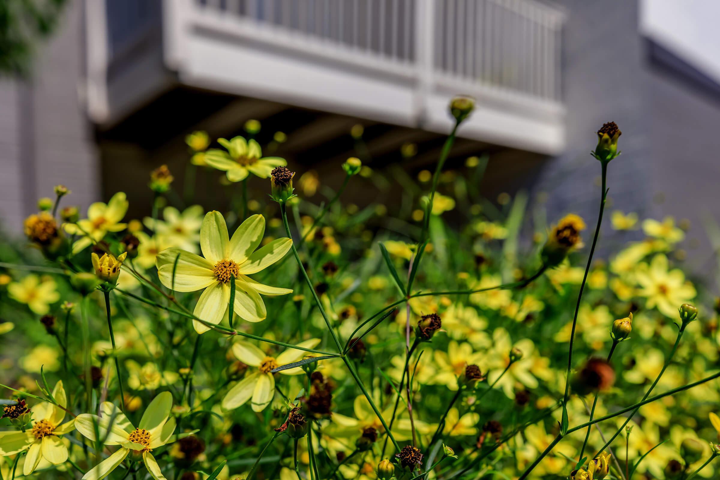 Landscaping at The Allante Apartments in Alexandria, VA