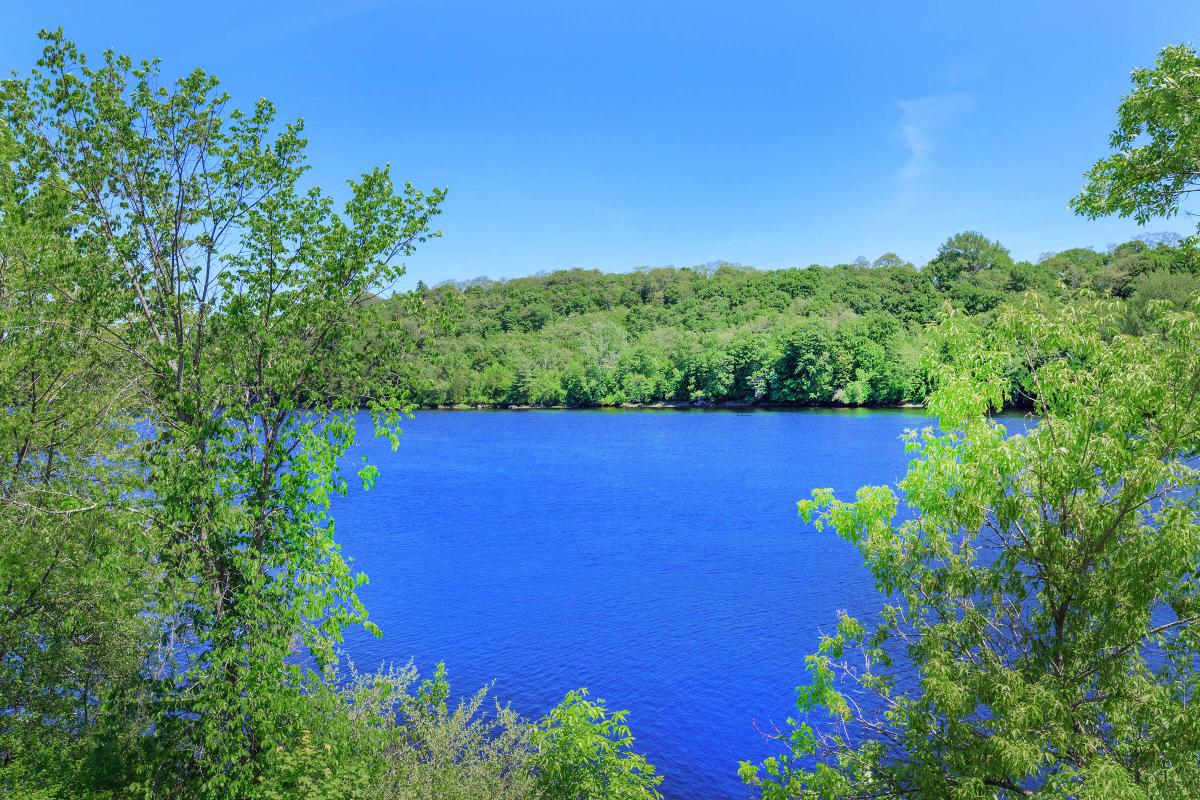 a body of water surrounded by trees