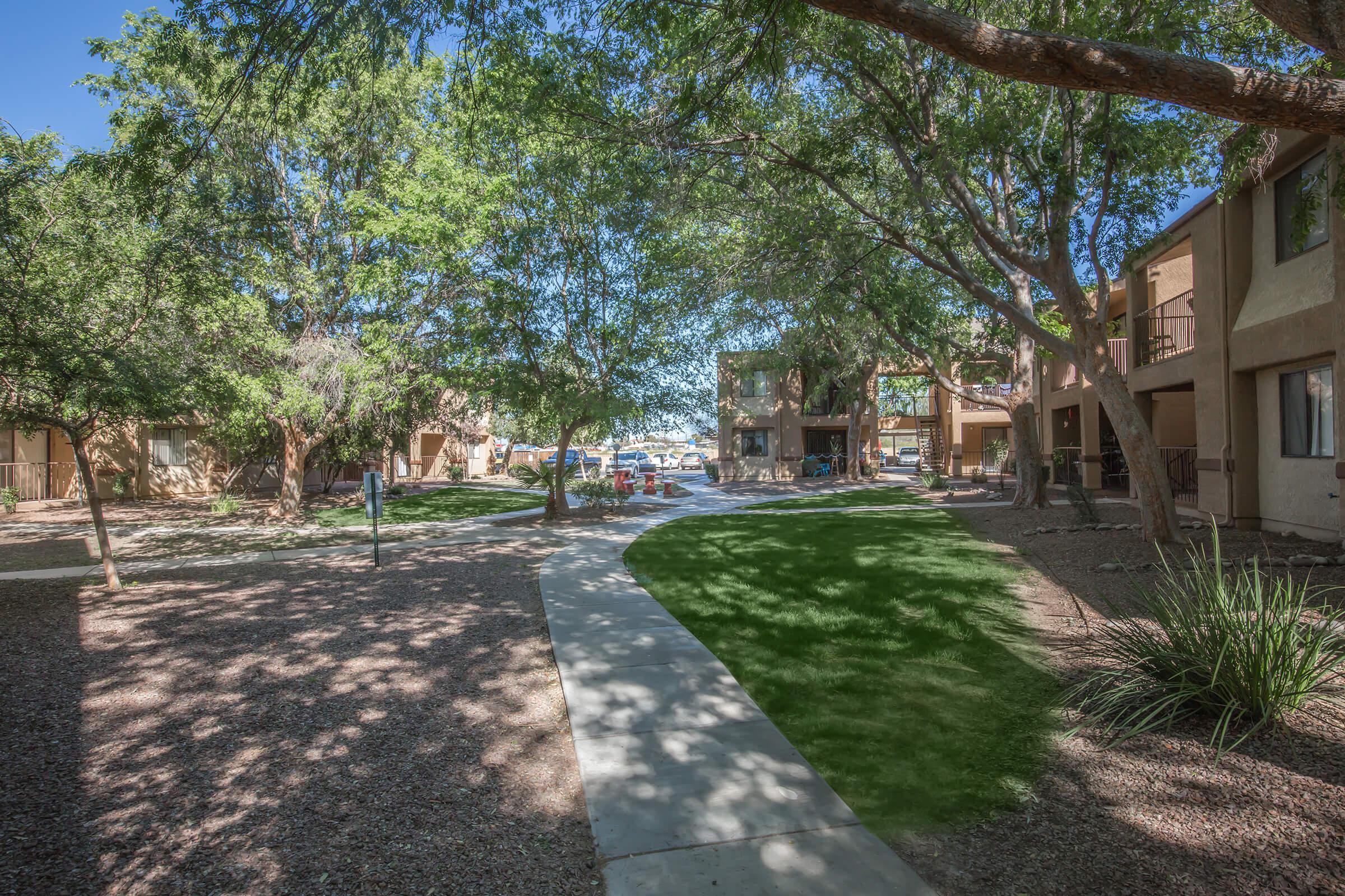 a tree lined street