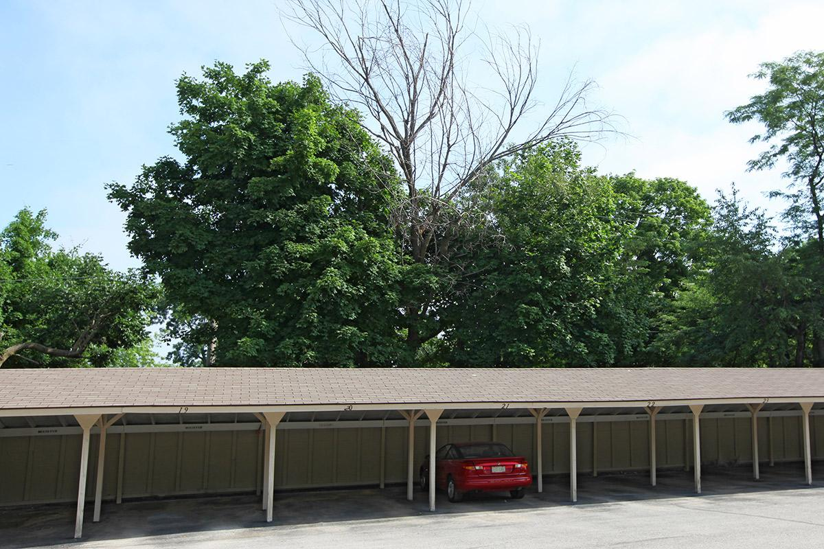 a tree in a parking lot