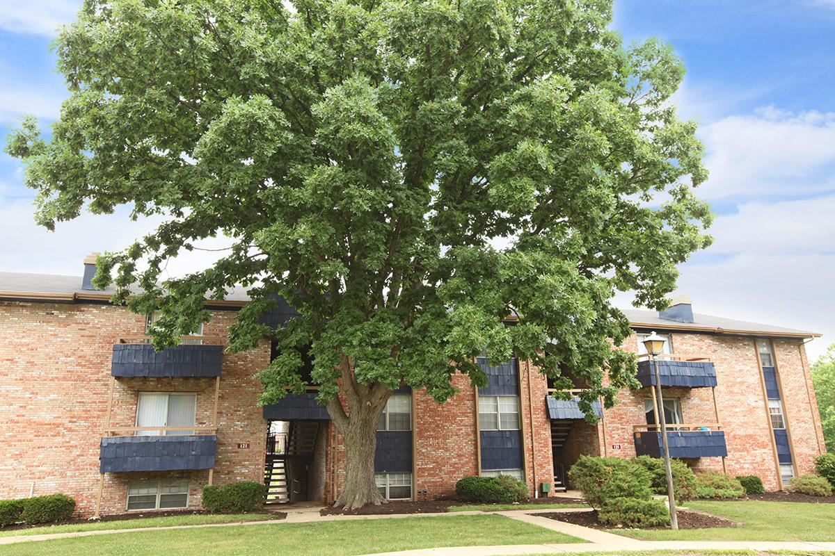a tree in front of a brick building