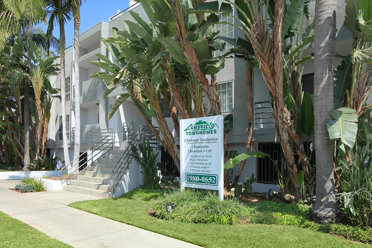 a sign on a sidewalk next to a palm tree