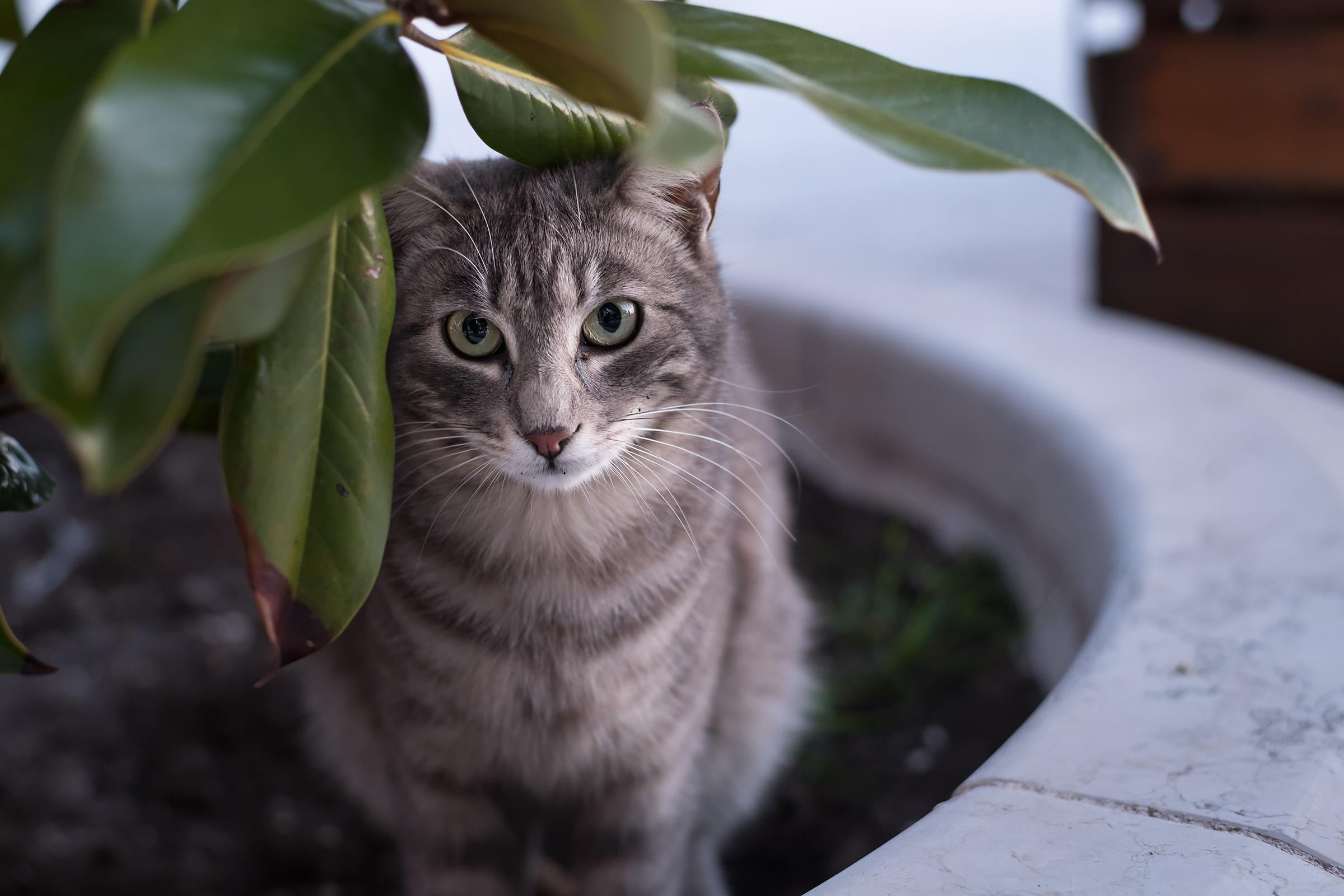 a cat sitting on top of a green plant