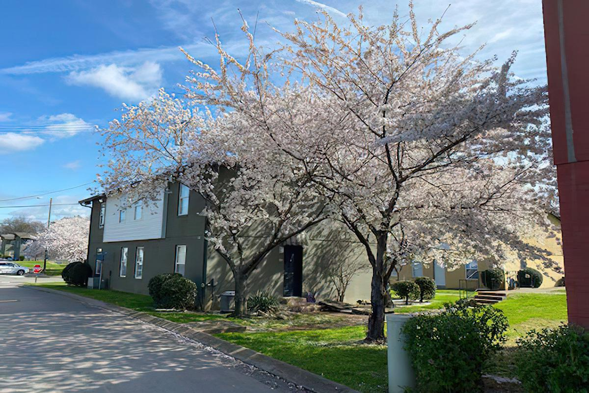 a tree in front of a house