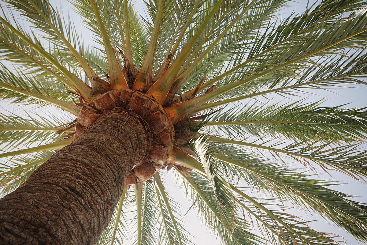 exterior-tree-palm.jpg